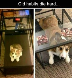 Morning Funny Picture Dump 37 Pics