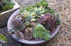 """Wild Ginger Farm News Blog: Saturday Class """"Plant a Succulent Container"""