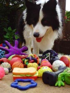 Evidence dogs don't distinguish items using shape
