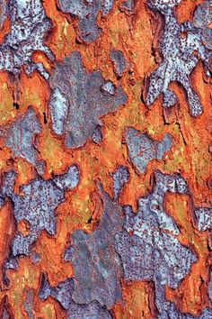 Cedric Pollet | tree bark ... but I would have to argue with that. Stupid adults. It's really an old map that has been stained by rust.