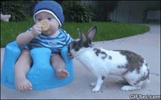 Sneaky rabbit steals cookie - www.gifsec.com