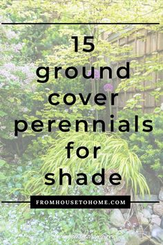 Plant these shade-loving perennial ground cover plants under bushes and trees to help prevent weeds from growing and add some beautiful flowers to your garden. | Shade Perennials Dwarf Plants, Tall Plants, Foliage Plants, Shade Flowers, Shade Trees, Shade Plants, Perennial Ground Cover, Ground Cover Plants, Shade Perennials