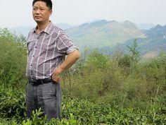 M. Li dans son jardin de Du Yun Mao Jian Mr Li in is tea garden by Camellia-Sinensis, via Flickr