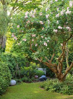 Fruit Garden, Tropical Garden, Landscape Design, Garden Design, Side Yard Landscaping, Shrub, Shade Garden, Dream Garden, Garden Inspiration