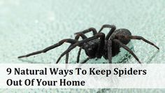 The very thought of seeing a spider on my carpet, or climbing up my wall, or lurking in my bath tub sends shivers down my spine. It's fair to say I don't like spiders – but I know they can be very beneficial so I don't want to kill them! Which is why this article is so great. It reveals nine fantastic natural ways to repel spiders and keep them out of your home without harming them and without harming your family with the use of chemical sprays. Let's be completely honest. Nobody REALLY ...