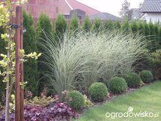 Przedwiośnie ogrodu..:) - strona 61 - Forum ogrodnicze - Ogrodowisko miskant ML