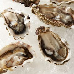 Wild Edibles Oysters