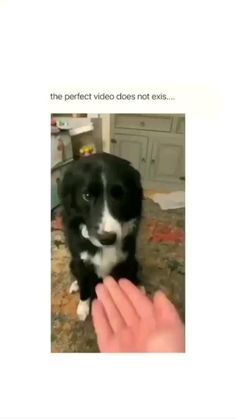Perfect video doesn't exist😂