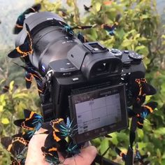 Photography allows you to capture the beauty of nature and within your life. You can even earn a living if you are aware of the proper methods to take photos Beautiful Bugs, Beautiful Butterflies, Beautiful World, Nature Animals, Animals And Pets, Baby Animals, Beautiful Creatures, Animals Beautiful, Butterfly Video