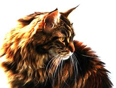 I am Bloodsong, a she-cat and I live and train others in the Dark Forest. I HATE the clans for banishing me when I killed the cat who tried to take my forbidden kit with a WindClan cat, I'm fierce and evil, RP by me