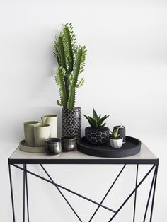 Idea to Steal: Go Crazy for Cacti - Apartment34