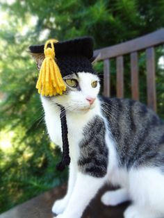 Graduation Pet Hat Costume - Graduation Cap for Cats and Small Dogs - The Graduate's Cat Cap