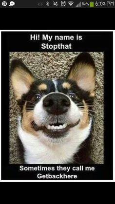 This is totally my dog!