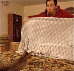 Watch: This cat is so confused by its owner's magic trick