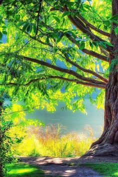{Sunny Tree}...Looking forward to sunny days with you beloved*Thankful to our FATHER for anytime together in love with you<3