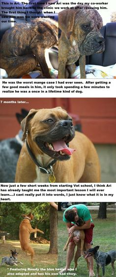 Stop animal abuse Animal Rescue Stories, Dog Stories, Animals Beautiful, Cute Animals, Funny Animals, Boxer Dogs, Boxers, Cute Animal Pictures, Dogs And Puppies