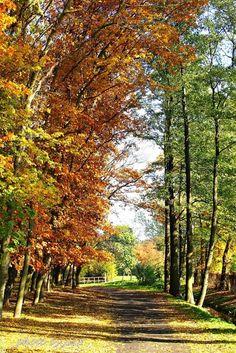 Jesiennie w parku