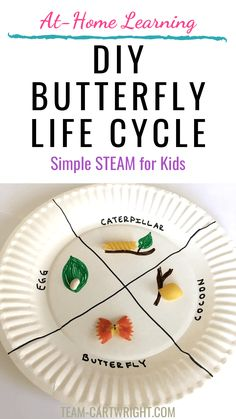 Butterfly STEAM Activities for Preschoolers and Toddlers - Team Cartwright