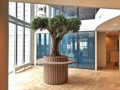 Kunst Olijfboom met echte stam en kunstblad. Plants, Plant, Planets