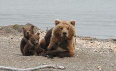 Les meilleures photos de voyage - TripAdvisor #Bear