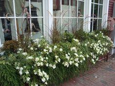 I  Nantucket flower boxes!