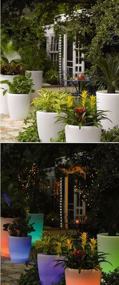 Solar Illuminated Planter Light up your landscape with these innovative planters Powered by the sun so you can display them anywhere . Outdoor Gardens, Container Gardening, Outdoor Inspirations, Planters, Amazing Gardens, Plants, White Planters, Urban Garden, Garden Projects