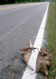 Don't die on the side of the road during a  road project...