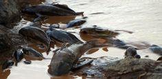Análise laboratorial detectou até mercúrio nas águas do rio mais importante de Minas Gerais – danos ambientais são irreversíveis