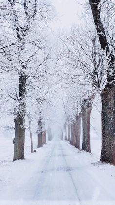 Morning Board, Happy New Year 2014, Natural Beauty, Live, Wallpaper, Videos, Nature, Outdoor, Outdoors