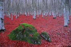 Bildergebnis für tumblr red mountains
