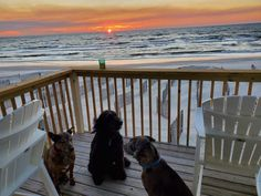 """Dog Friendly Beaches Dog Friendly Beaches - Pet Friendly Info - Cape San Blas allows dogs ANY time! Cape San Blas is one of the true """"dog beaches"""" in FL! Cape San Blas Florida, Dog Beach, Us Beaches, Dog Friends, Dog Love, Sunsets, Dogs And Puppies, Your Dog, Pets"""