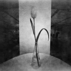 Tulip: By Leszek Wyrzykowski, more artworks http://www.artlimited.net/26921 #Photography #Pinhole #Object #Still #life