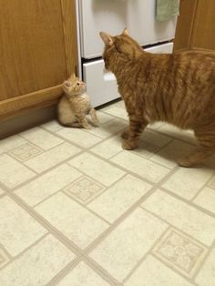 I adopted a new kitten yesterday. He may have been a little intimidated by my current cat. http://ift.tt/1uuj0as