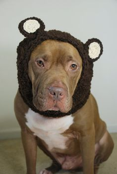 Moose is very lucky he doesn't really need this... I love it!!!! Bear Dog Snood for Large Breeds by courtanai on Etsy, $30.00