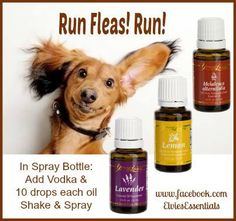 Does your dog have fleas?  Would you like to treat them naturally with essential oils instead of toxic chemicals that not only hurt the fleas but can hurt your pup? www.theoildropper.com