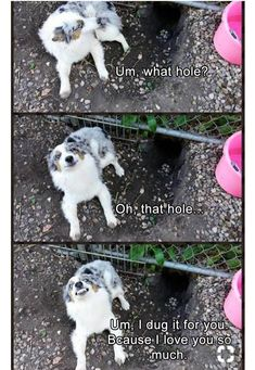 This is my dog, Luna. She will dig a hole and pretend it wasn't her XP