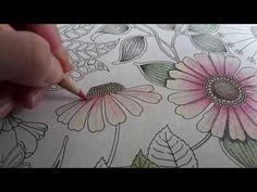 Secret Garden, How to color a flower - Colored Pencil Tutorial, Colored Pencil Techniques, Zentangle, Secret Garden Book, Secret Garden Coloring Book, Book Flowers, Butterfly Drawing, Coloring Tutorial, Polychromos