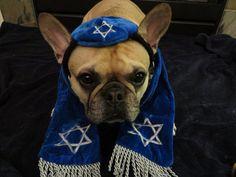 Happy Hanukah from Roxy the French Bulldog