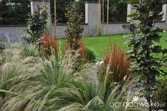 Lawendowy zawrót głowy - strona 770 - Forum ogrodnicze - Ogrodowisko Garden Design, Projects To Try, Yard, The Originals, Plants, Ideas, Home, Patio, Yards
