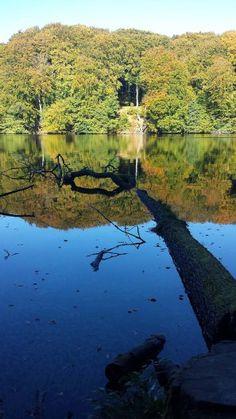 Wunderbare Farben der Buchenwälder Rügens im Herbst