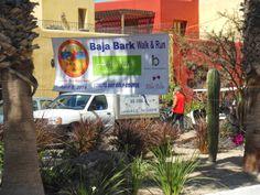 Baja Bark (and a Bite).