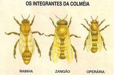 Curiosidades sobre abelhas.  1. Uma abelha campeira visita 10 flores por minuto em busca do pólen e do néctar.  2. Ela faz, em média, 40 voos diários, pousando em 40 mil flores.  3. Com a língua, a abelha recolhe o néctar das flores e o guarda numa bolsa localizada no fundo da garganta. Depois, ela volta para a colmeia e o néctar vai passando de abelha para abelha. A água evapora, o néctar engrossa e se transforma em mel.  4. Uma abelha produz 5 gramas de mel por ano. Para produzir um quilo…