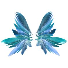 wings ❤ liked on Polyvore featuring wings, backgrounds, butterflies, fillers and fantasy
