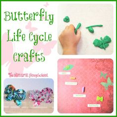Take a look at how easy it can be to make butterfly life cycle lessons fun and hands-on to enhance learning and take them to the next level.