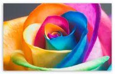 Potential tattoo idea? Small rainbow/gay pride remembrance.