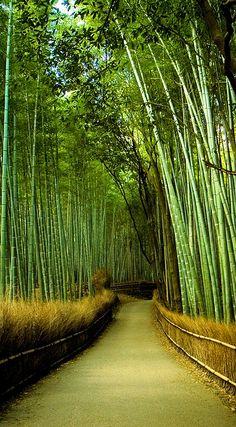 Putting Japan back on the tourism map – Garden and Nature Tranquility Putting Japan back on the tourism map Arashiyama Bamboo Forest, Kyoto, Japan ❤ – bamboo garden – kyoto japan Backyard Garden Landscape, Green Landscape, Garden Trees, Garden Landscaping, Kyoto Japan, Japan Sakura, Japan Japan, Bamboo Forest Japan, Places To Travel