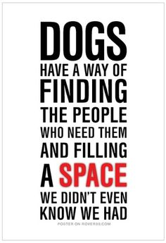 Dog finding people