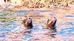 Sinaloa, más natural que nunca.- Además de playa y carnaval, el estado tiene otros encantos para los viajeros con ganas de acción, entre cañones y manglares poco explorados
