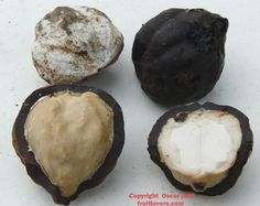 Kukui Nut: Rare Fruit Seeds and Exotic Tropical Fruit Seeds