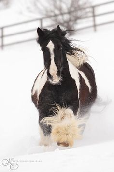 I will ride horses in the snow one of these days :)